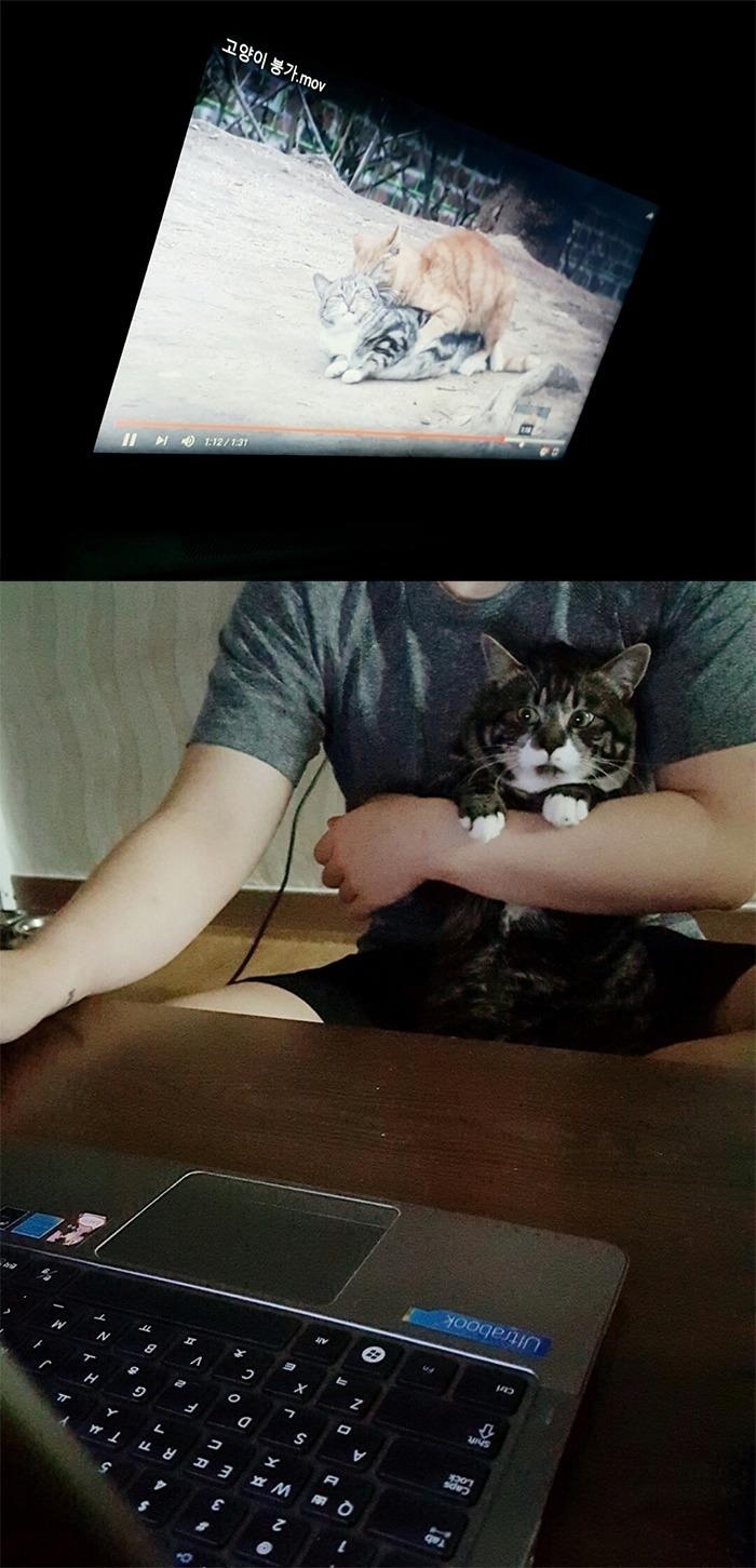 고양이에게 얏옹을 틀어줬다.jpg