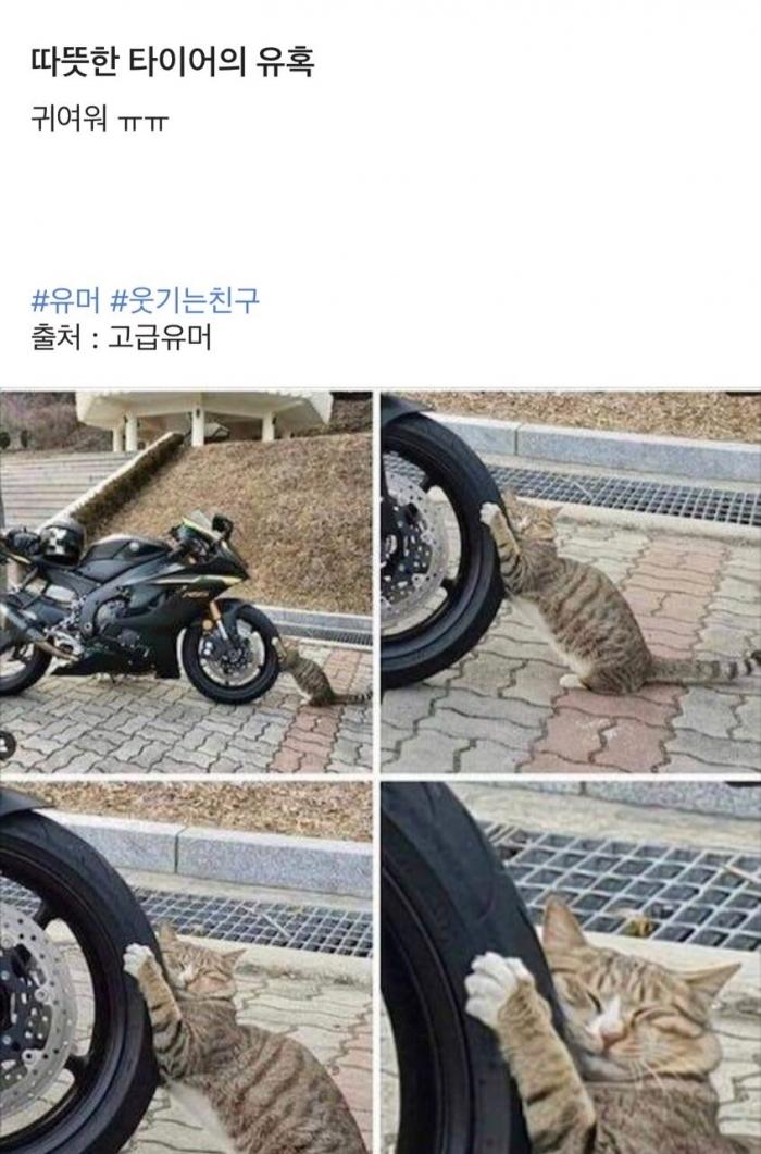 따뜻한 타이어의 유혹.jpg