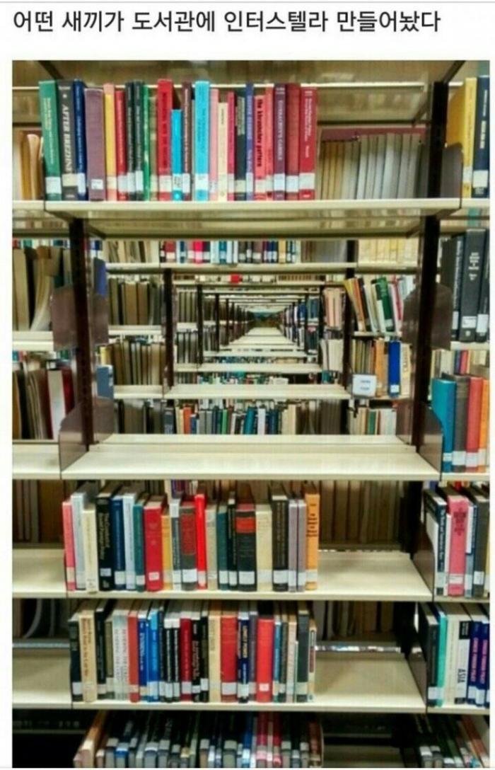 특이점이 온 도서관.jpg