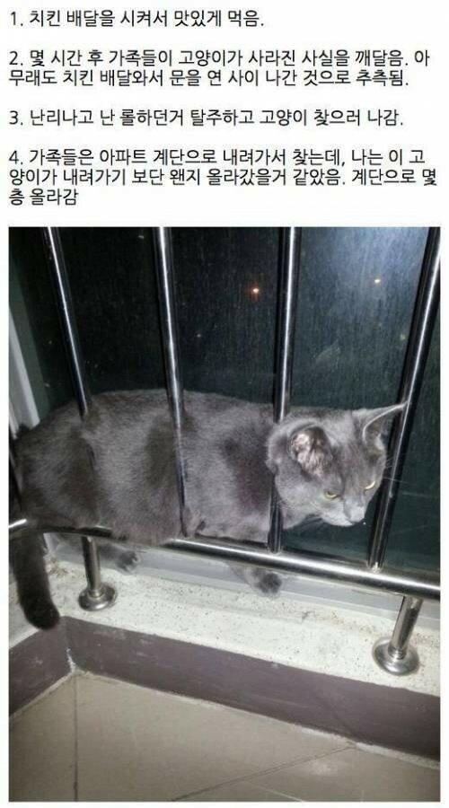 탈출한 고양이의 최후1.jpg
