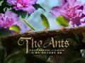 개미 소재 전략 게임 '디 앤츠:언더그라운드 킹덤' 사전예약 개시