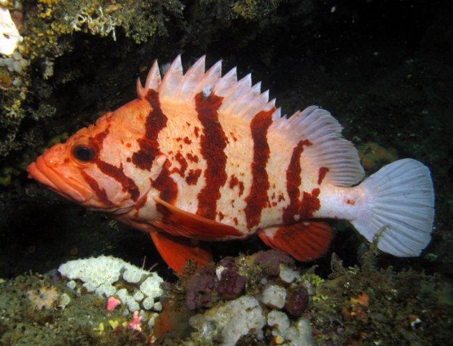 Season2 for Pacific fish company