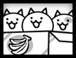 고양이 한박스